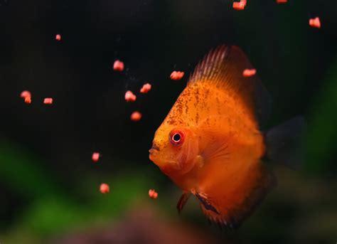 fish eat petmd