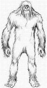 Bigfoot Sasquatch Pages Yeti Drawing Drawings Coloring Monster Kentucky Sightings Frontiers Zoology Tracking Fiction Fact Legends Ufo Sketch Mothman Pencil sketch template
