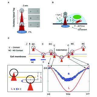 Dan Cojoc Phd Institute Materials Iom Researchgate