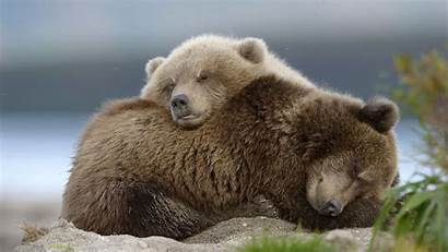 Bear 4k 5k Animal Wallpapers Cub Ultra