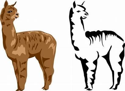 Llama Alpaca Clipart Alpacas Vector Clip Illustration