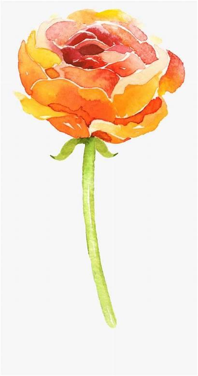 Watercolor Watercolour Easy Orange Flowers Texture Transparent