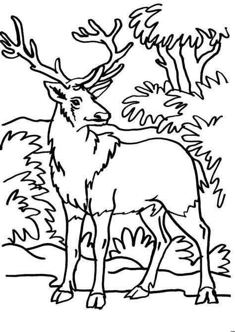 lupo disegno facile per bambini disegno cervo da colorare disegno volpe da colorare