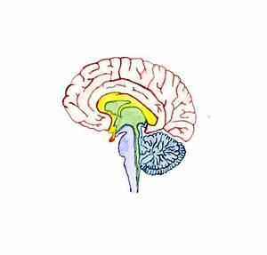 Mindfulmonday  U2013 Your Brain