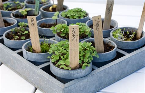 edible pots better homes and gardens