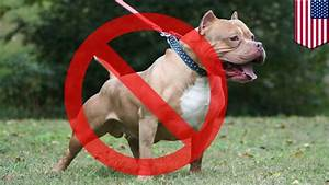 Pit Bull Ban  U S  Needs To Seriously Consider Banning