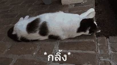Cats Rolling Cat Things Weird กล แมว