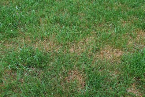 Lawn Fungus, Njlawncare, Removing Lawn Fungus