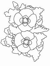 Flowers Coloring Pages Realistic Poppy California Printable Coloringpagebook Coloringpages101 Game Advertisement sketch template