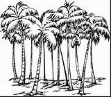 Palm Tree Outline Drawing Coloring Pages Getdrawings sketch template