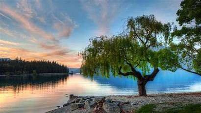 Serene Wallpapers Lake Tree Nature Water Pretty