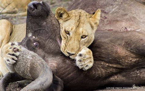 Game On With Safarilive And Nat Geo Wild! Wildearth