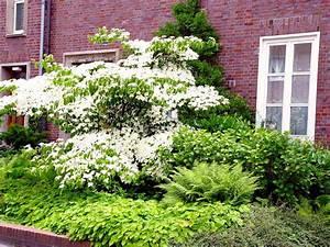 Bäume Für Den Vorgarten : vorgarten gestalten nordseite ~ Michelbontemps.com Haus und Dekorationen
