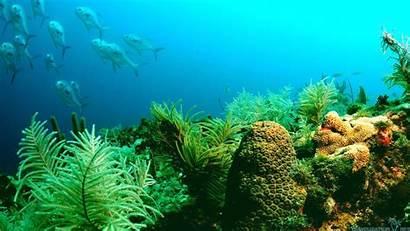 Marine Ocean Wallpapers Sea Desktop Backgrounds Iwallhd
