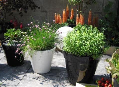 potager en pot balcon cultiver des l 233 gumes sur balcon ou sa terrasse