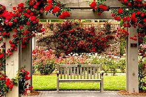 Green Flowers Home Garden Hd Wallpaper