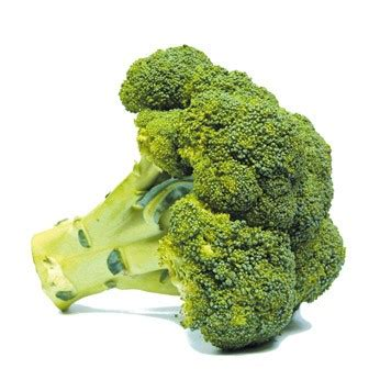 cuisiner brocolis frais le brocoli préparer cuire associer cuisiner