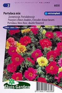 Portulak Pflanzen Kaufen : portulak doppelblumig gemischt kaufen online bestellen ~ Michelbontemps.com Haus und Dekorationen