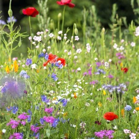 Garten Umgraben Und Düngen Im Herbst by Blumenwiese Anlegen Mein Schaner Garten Wildblumenwiese Im