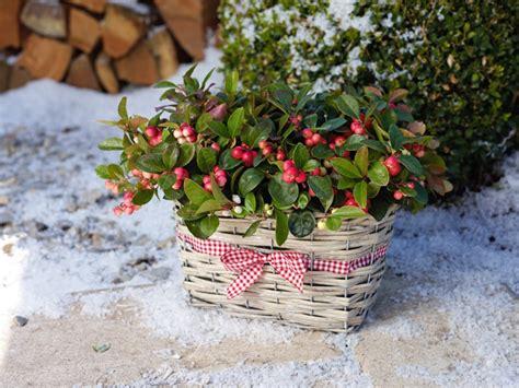 Die Richtige Wintervorbereitung Für Garten