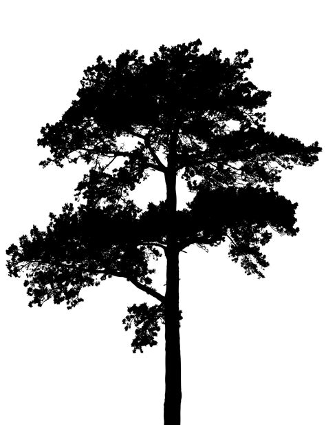 tree silhouette free stock photo public domain pictures