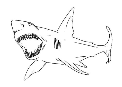 How To Draw Shark Jaws Coloring Pages Best Place Color