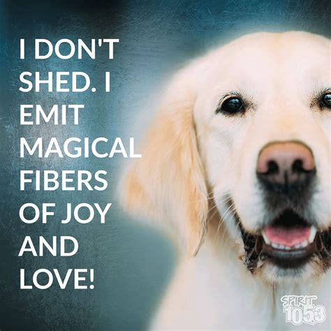 i don t shed it s magic cute dogs puppies humor