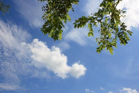 เธอเห็นท้องฟ้านั่นไหม   บ้านสวนพอเพียง