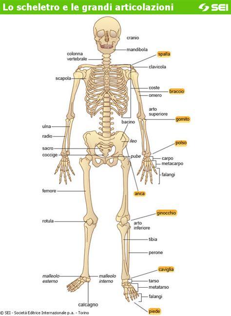 libro da colorare scheletro immagini da colorare pravresh