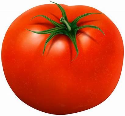 Tomato Clipart Clip Transparent Vegetables Yopriceville Inside