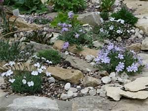 Blumen Für Steingarten : steingarten anlegen und bepflanzen gestaltungsideen f r hobbyg rtner ~ Sanjose-hotels-ca.com Haus und Dekorationen
