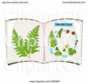 Clipart Of A Diagram Of A Fern Life Cycle