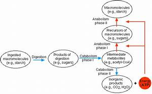 Atp Is Which Type Of Macromolecule
