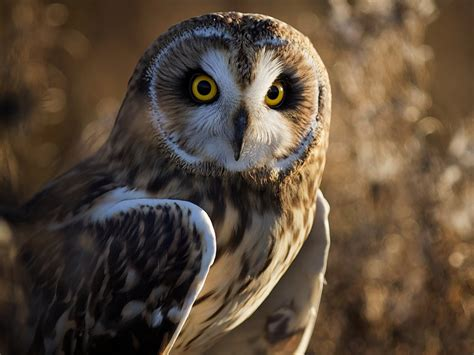 Hd Owl Wallpapers by Owl Hd Wallpapers Desktop Pictures One Hd Wallpaper