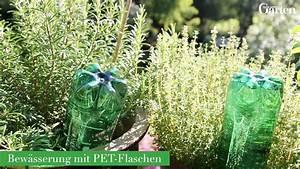 Pflanze In Flasche : pflanzen mit pet flaschen bew ssern mein sch ner garten ~ Whattoseeinmadrid.com Haus und Dekorationen