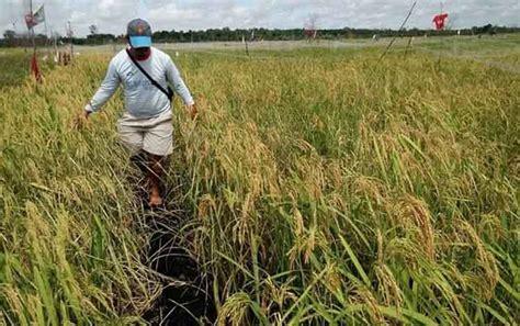 pengembangan tanaman pangan terkendala masalah lahan