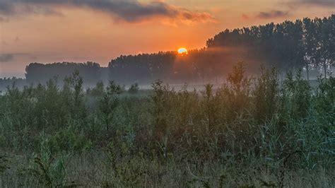 kostenlose bild daemmerung sonnenaufgang kontur wald