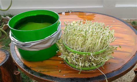 เกษตรผักไฮโดร อุปกรณ์ปลูกผักไฮโดร,เมล็ดผักไฮโดรโปนิกส์,การ ...