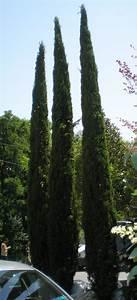 Trees Evergreen