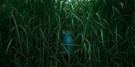 'in The Tall Grass' Stephen King/joe Hill