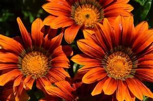 Welche Blumen Blühen Im August : kostenloses foto blumen bl te orange pflanzen kostenloses bild auf pixabay 54937 ~ Orissabook.com Haus und Dekorationen