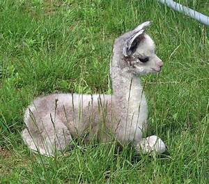 Best 25+ Baby animals ideas on Pinterest | Cute baby ...