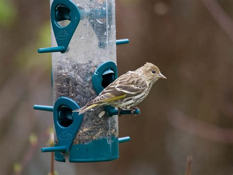 attract birds to your backyard part 3 styles of bird