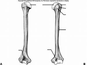 8 Best Images Of Arm Anatomy Worksheets