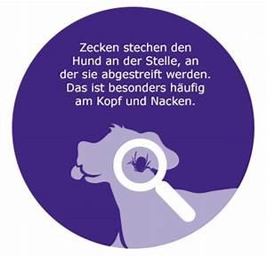 Zecke Entfernen Hund Kopf Steckt : zeckenschutz ma nahme iii zecken entfernen beim hund ~ Orissabook.com Haus und Dekorationen