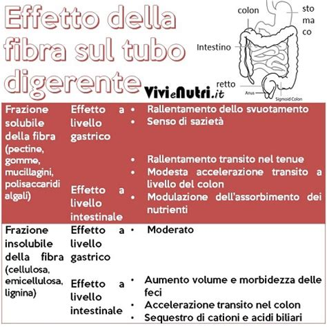 colon irritabile e alimentazione l alimentazione nella sindrome colon irritabile