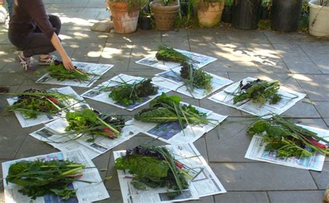 La Garden Blog  Month By Month Planting Guide For