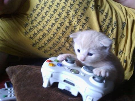 friends kitten chilling   xbox adorable