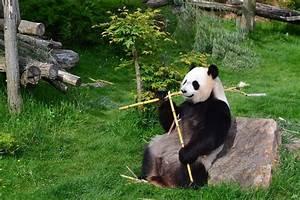 Grosse Peluche Panda : les 25 meilleures id es de la cat gorie zoo de peluche sur pinterest organiser des animaux en ~ Teatrodelosmanantiales.com Idées de Décoration