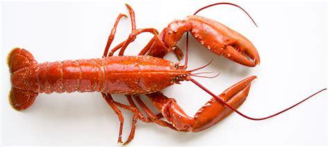 comment cuisiner le homard cuit surgelé le homard cuisine à l 39 ouest